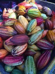 Image result for cocoa pod graphic