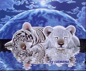Weiße Tiger und Löwe ..................GIF.....