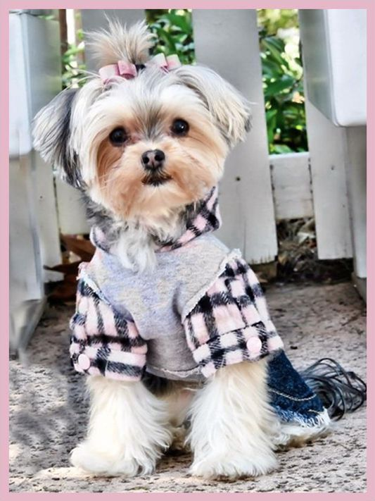 cute little dog in clothes