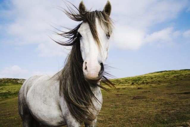 2015 HOROSCOPE + FENG SHUI - Chinese Zodiac and Feng Shui Tips for the Horse Sign in 2015