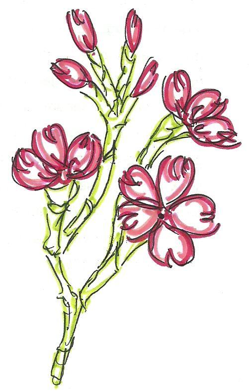 Cherry Blossoms 3 by ~nano9999 on deviantART