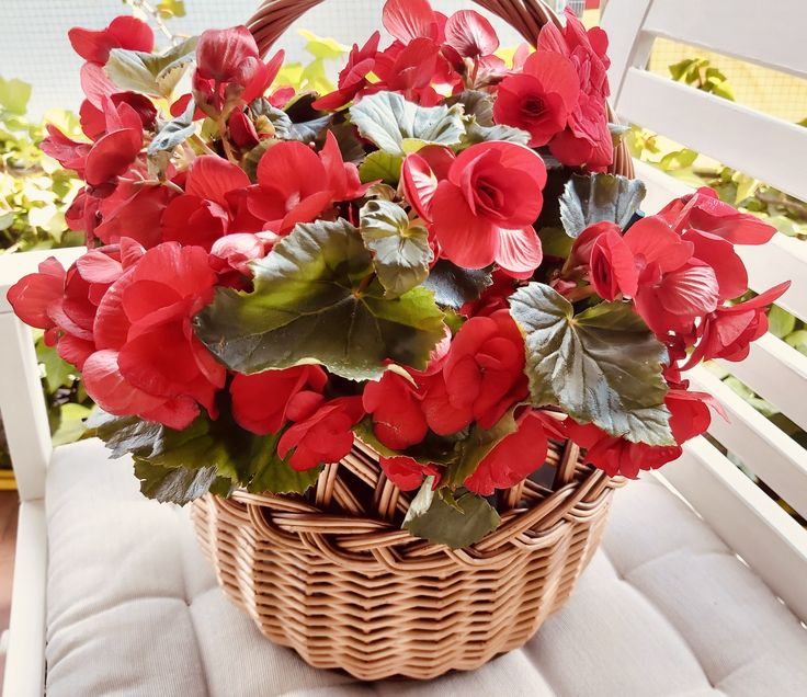Wicker Baskets, Strawberry, Table Decorations, Fruit, Plants, Html, Home Decor, Decorating Baskets, Summer Parties