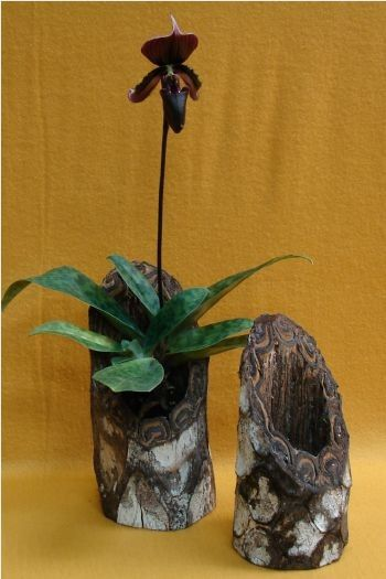 tree fern orchid pot - many orchids enjoy having their natural growing habitat recreated in the home for ideal growth and flowering