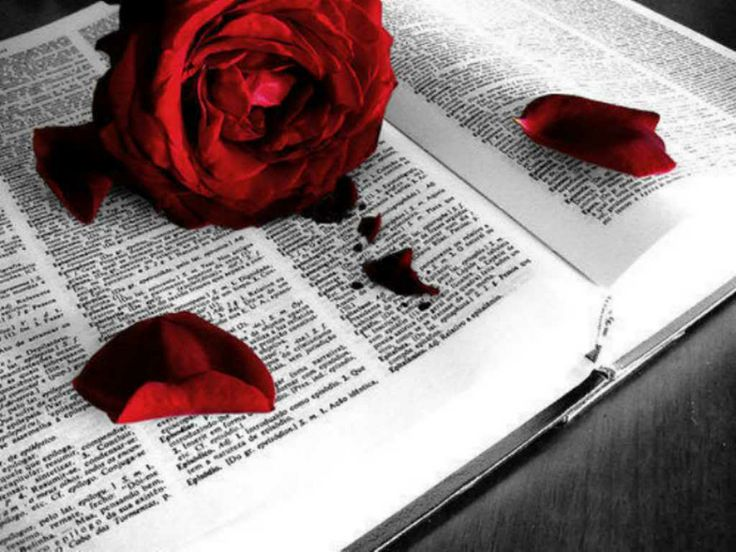 """The Bible.  God's word.  I highly recommend this read every day.  """"The statutes you have laid down are righteous; they are fully trustworthy.  Your promises have been thoroughly tested, and your servant loves them.""""  Psalm 119:138,140"""