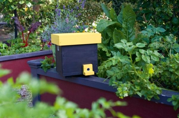 Our furry pollinating friends need all the help they can get in the nesting season.