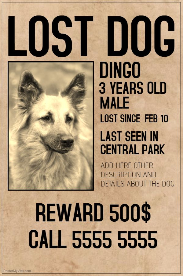 Lost Pet Flyer Old Style. Click on the image to customize on PosterMyWall.