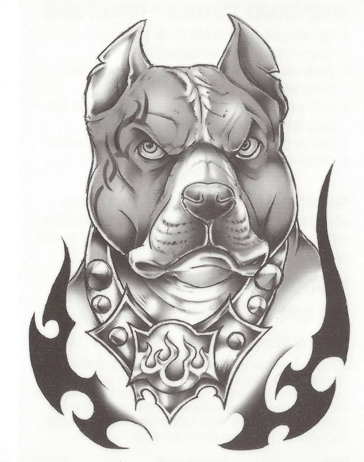 pitbull drawings - Google Search