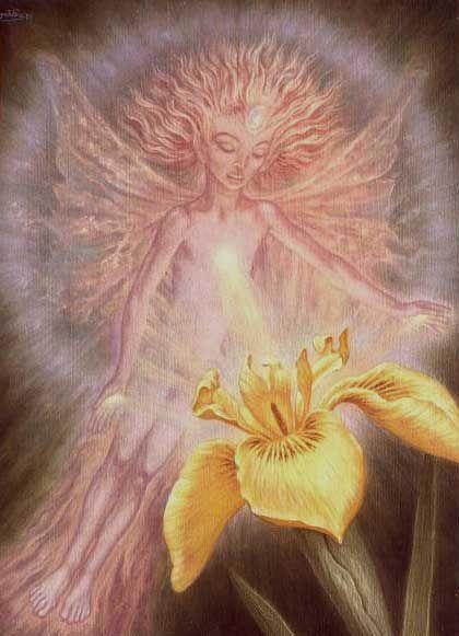 Johfra  Bosschart - Elves: The beam of love