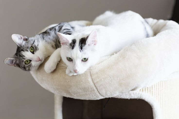 Animal Internal Medicine & Specialty Services | Kitty Concerns: Why Do Cats Sleep so Much?