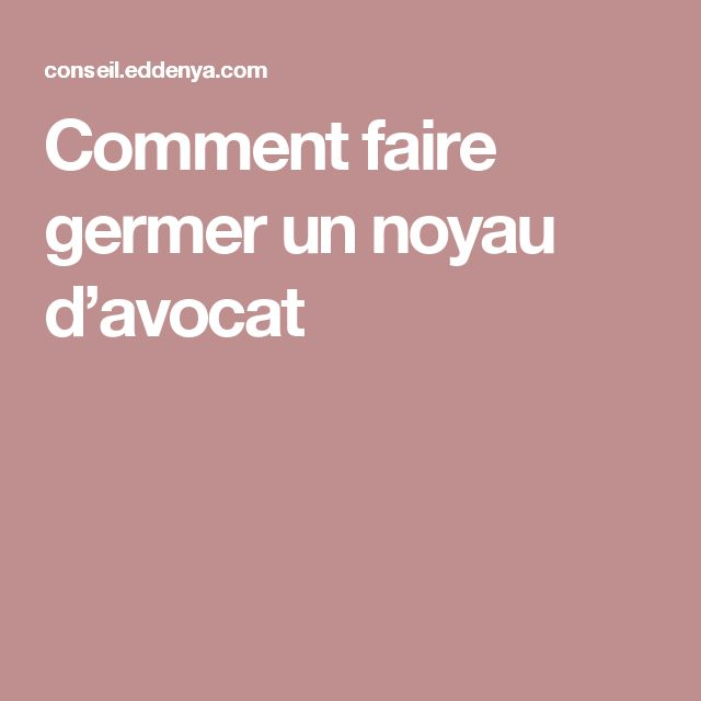 Best 25 faire germer un avocat ideas on pinterest noyau - Faire pousser un citronier ...