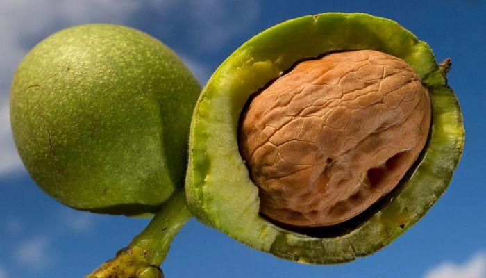 Черный обладает толстой скорлупой, которую очень сложно расколоть, а на его поверхности имеется тонкая пленка с сильным острым ароматом. Родиной черного ореха является область Аппалачи, расположенная в центральной долине Миссисипи. Раньше плодами этого растения питались индейцы Северной Америки. Вкусовые качества плодов данного вида хорошие.