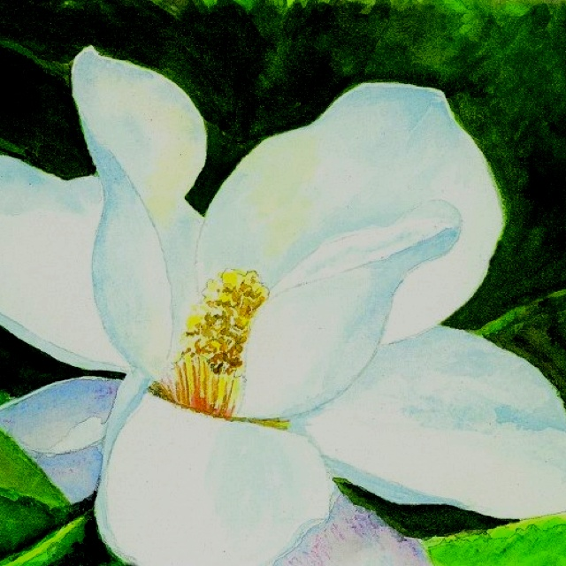 """Magnolia"" 9 1/2""x6 1/2"" Watercolor"