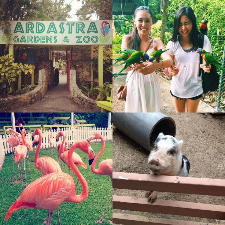 Sunday = Fun Day! Immerse yourself in the wonders of the island and explore the lush tropical gardens and hundreds of beautiful animals of the Ardastra Gardens and Zoo.  http://bit.ly/1QTlGsC