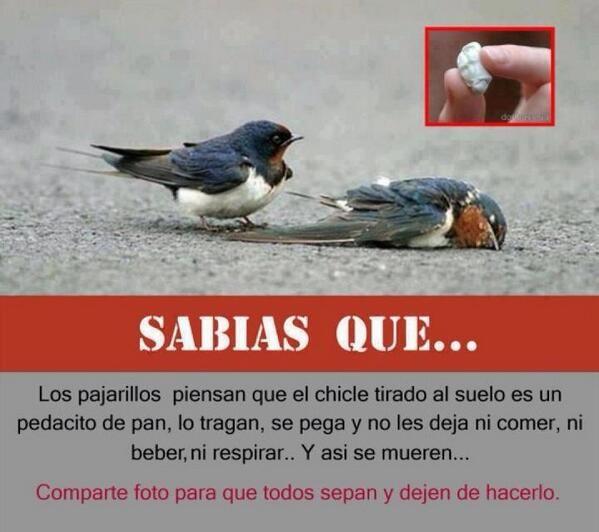 """TIERRA SANA en Twitter: """"No mates a los pájaros al botar tus chicles al suelo. La basura en su lugar... https://t.co/yFmrkK0CJJ"""""""