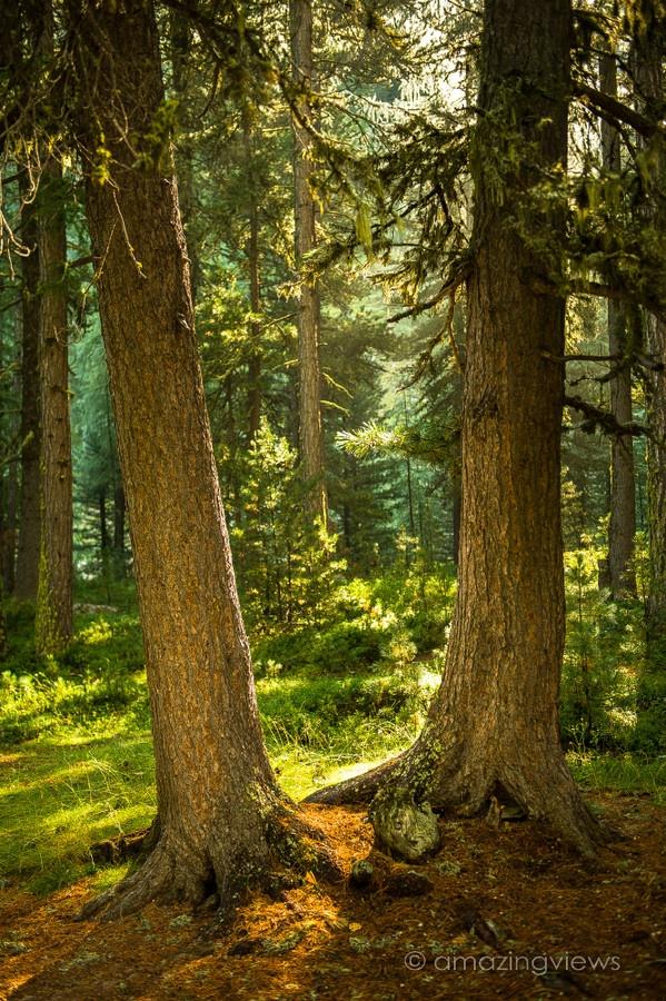 Magic Forest, Val Roseg, Engadin, Switzerland