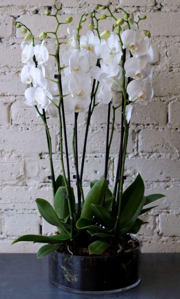 Орхидеи в интерьере - Дизайн интерьеров | Идеи вашего дома | Lodgers
