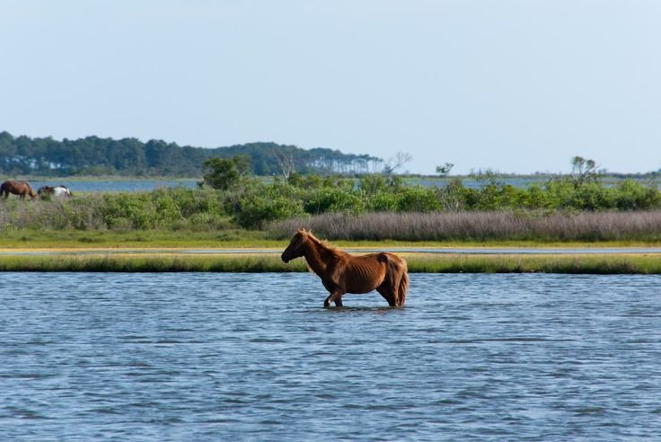 See tips on visiting Assateague Island, off the coast of Maryland and Virginia, learn about fishing, crabbing, bird watching, swimming and more.