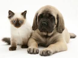 Resultado de imagem para cachorrinhos e gatinhos fofos