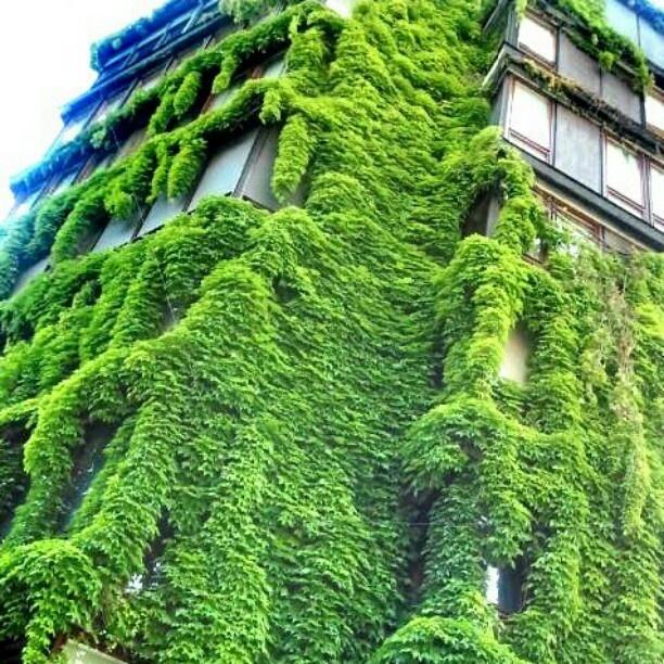 urban jungle in Milan