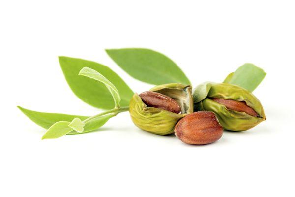 Beneficios del aceite de jojoba en tu #piel y #cabello #cuidadonatural: http://blog.quieru.com/2015/04/06/beneficios-del-aceite-de-jojoba-0430138.html?utm_source=pnt&utm_medium=post&utm_campaign=aceitejojoba&utm_term=herbolario