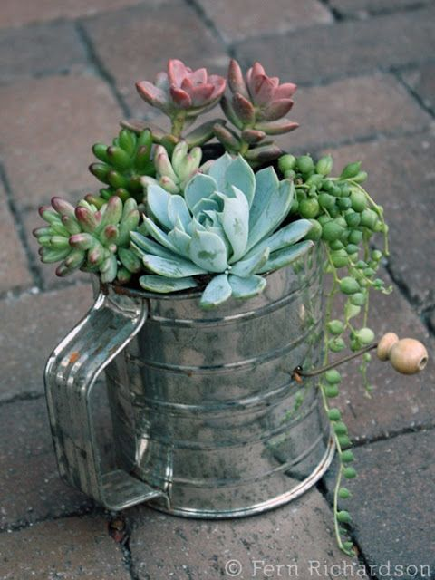 pot plant ideas | Welcome Spring! Succulent Flour Pot Sifter via Southern Belle Simple