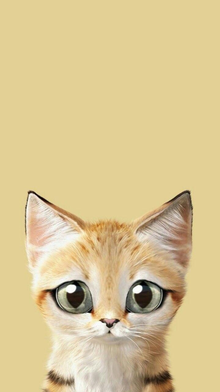 Kitten Wallpaper Petit Chaton Fond D Ecran Pour Telephone