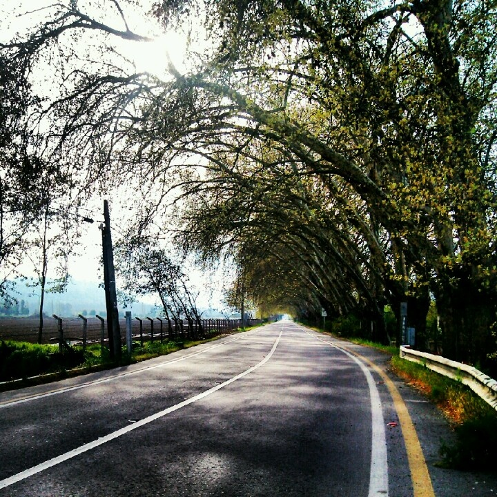 Túnel de árboles en entre Champa y Vinculo, cerca de la Laguna Aculeo, Chile