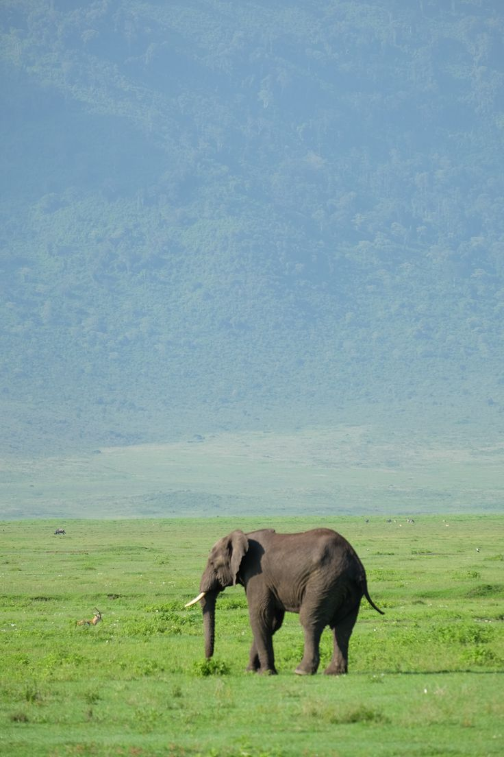 Going on safari in Tanzania? Here are some things to know.