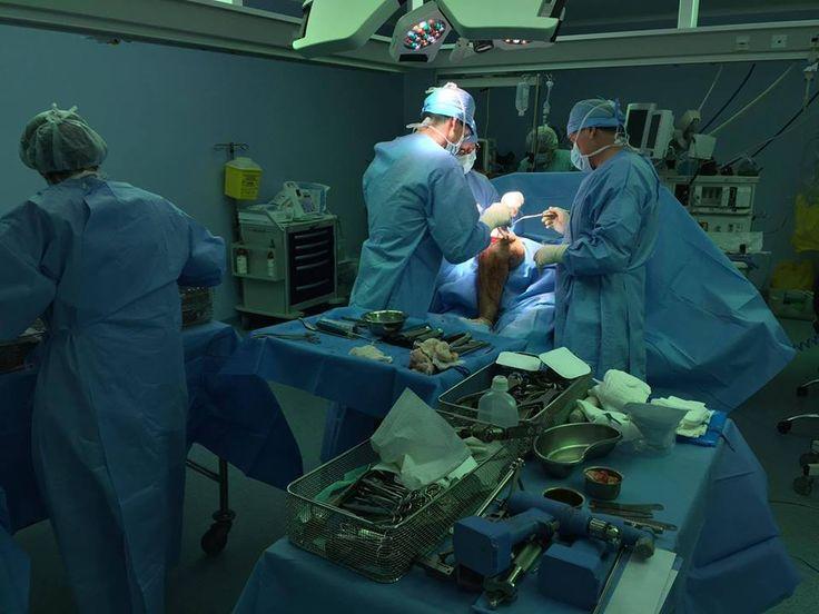 Lékaři z Nemocnice Na Bulovce budou v jordánském městě Ammánu v rámci programu české vlády MEDEVAC, který je zaměřen na pomoc lidem postižených konfliktem v Sýrii, operovat až do 11. března.  Momentálně dokončují 14. operaci ze šestnácti naplánovaných. Jde zatím o největší počet operací ze všech uskutečněných misí v Jordánsku. Mezi pacienty byly i tři děti.