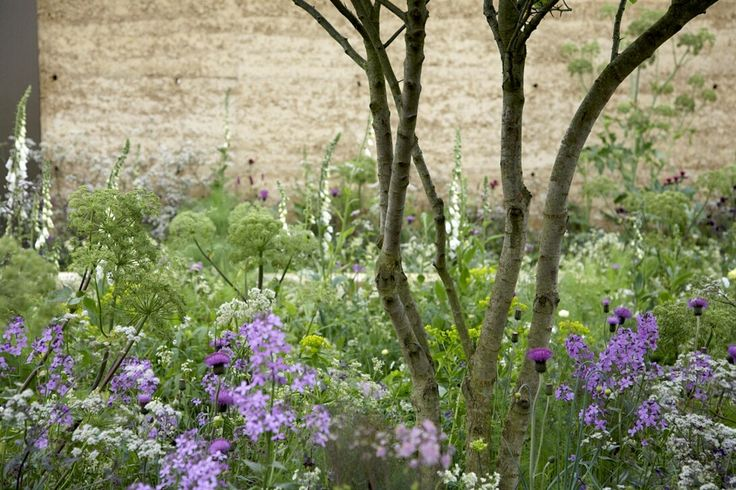 soft natural planting against contemporary hard landscaping || sarah price landscapes | QVC garden Chelsea 2008