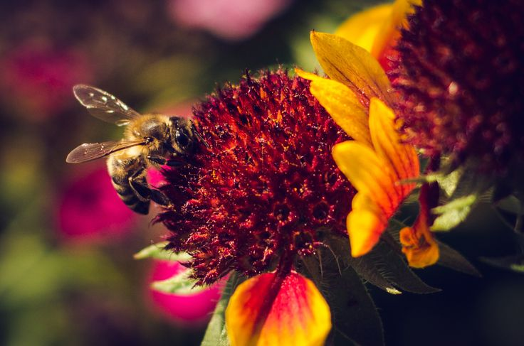 Honney Bee by Pricope Marian on 500px