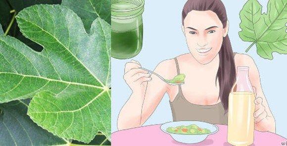 Foglie di fico contro diabete, colesterolo e trigliceridi I fichi e le loro foglie contengono una grande quantità di nutrienti, così come benefici per la nostra salute. Oltre ad essere ricchi di fi…