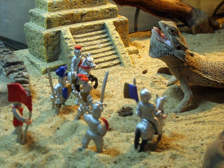 I was looking for pictures of a bearded dragon on deviantArt and came across this picture. Too funny.   Attack of the Bearded Dragon by astomious.deviantart.com on @deviantART