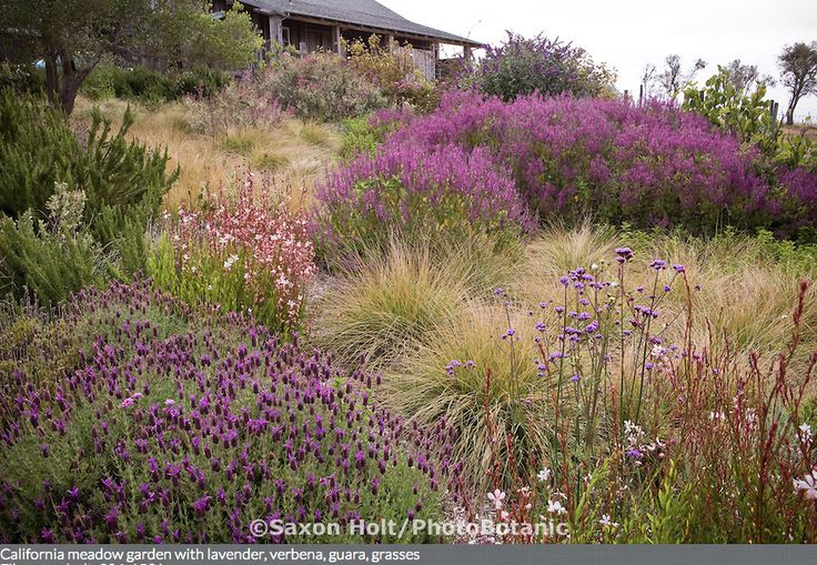 Fields of lavender and grasses