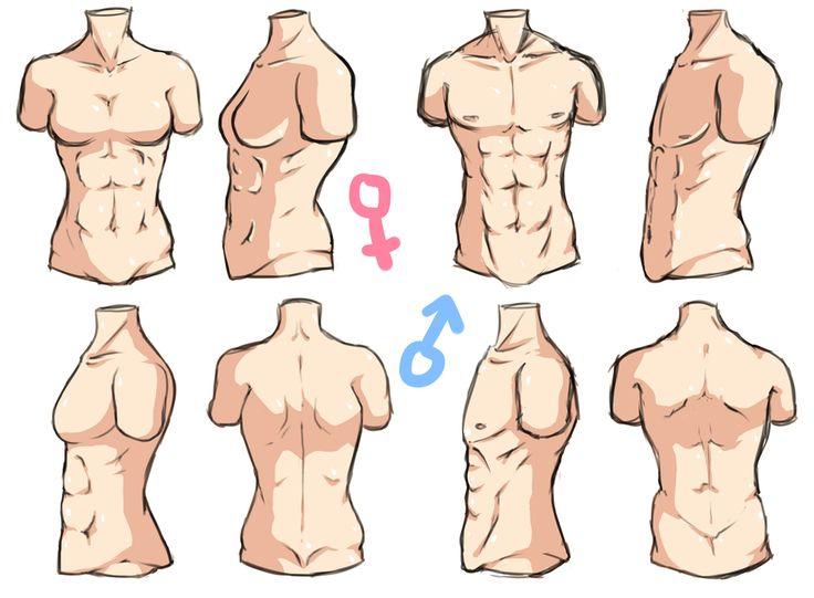 Male Torso Drawing Reference 84159 | BLOGHD