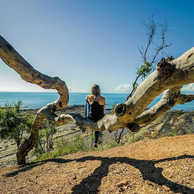 Sitting on a gum tree over red soil, under blue skies, gazing out over the pacific ocean...so much Australia in one photo.