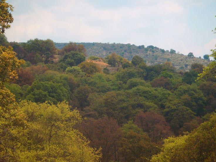 """El bosque de Amozoc, se encuentra integrado por una sierra o lomería conocida como los cerros de Amozoc; las expresiones populares como """"vamos al cerro"""", """"fuí al cerrito"""", &…"""