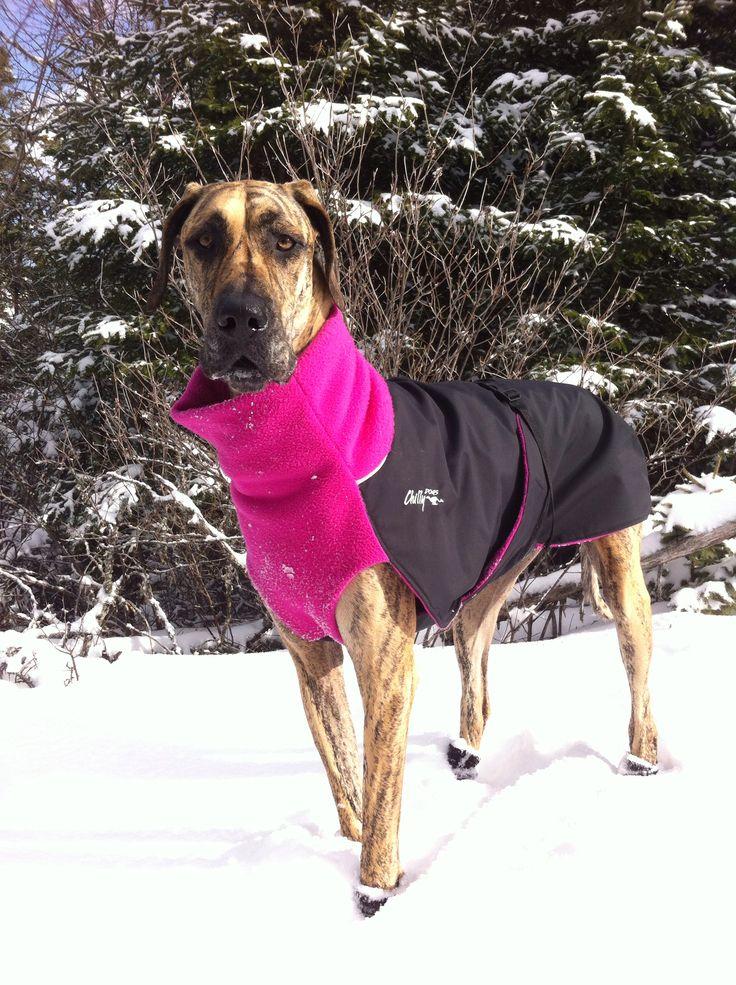 7 best Winter Dog Wear images on Pinterest   Dog wear, Dog ...