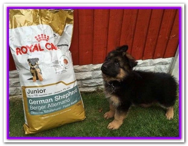 What Is The Best Dry Dog Food For A German Shepherd Puppy Best