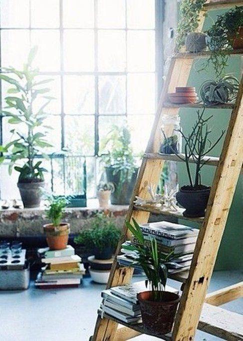 1000 id es sur le th me etagere echelle sur pinterest chelle echelle bois - Echelle decorative pour plantes ...
