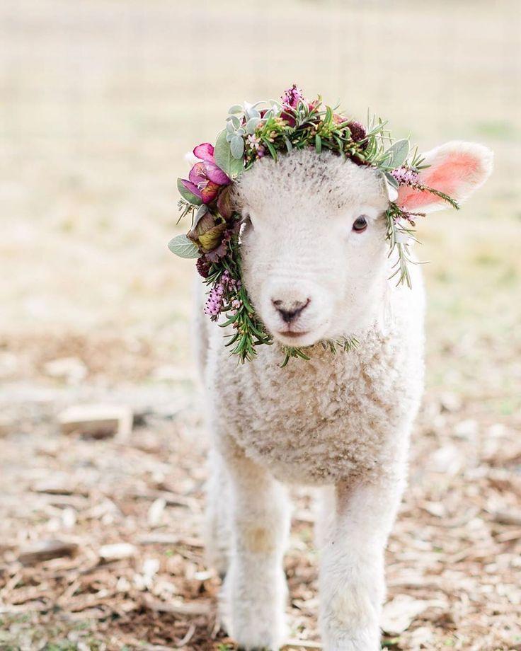 Открытка с овечкой фото, девочке