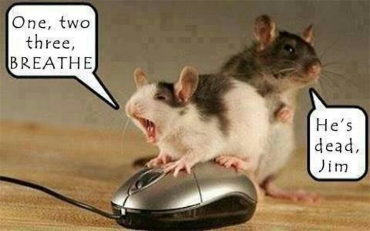 have a mice day!