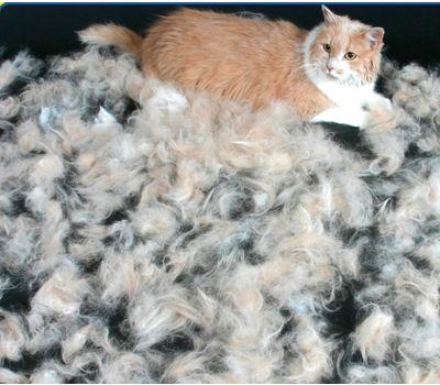 exemple   Furminator chat élimine 36e