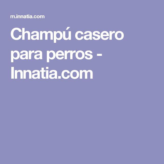 Champú casero para perros - Innatia.com