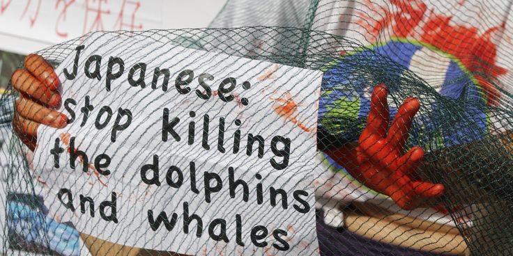 the issue of whaling in norway and japan A whale is currently worth about $6,000 for its meat in norway -- a total of $4 million for the 36 whaling boats that are licensed for this year norway and japan together are expected to kill.