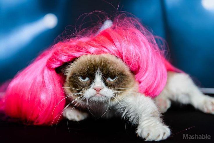 Grumpy Cat as Nicki Minaj #Tard #GrumpyCat