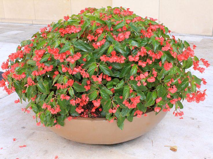 25 melhores ideias sobre plantas resistentes ao sol no for Plantas decorativas resistentes