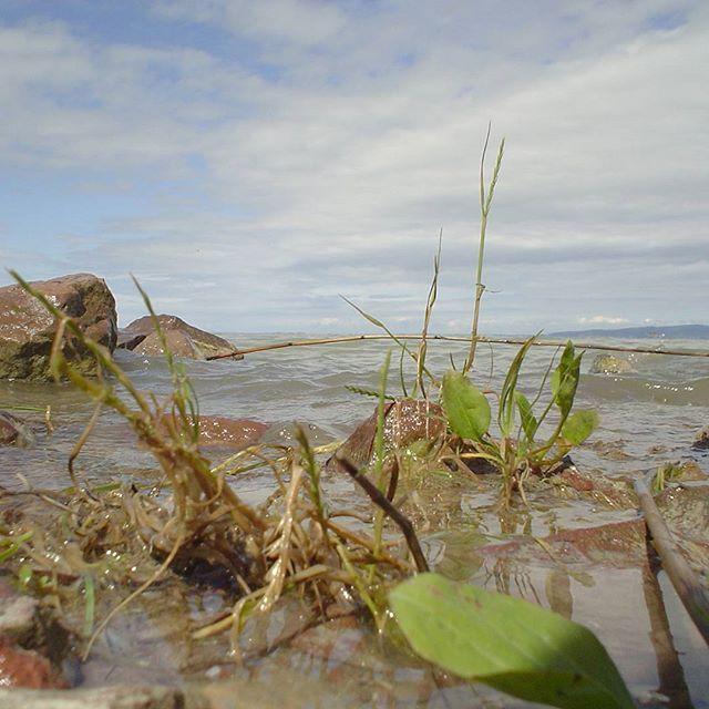 Archívum 46: Bélatelepi strand 2004 #balaton #hungary #memories #clouds #lake #momentsinbalaton #mik