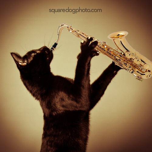 29 best images about Animals Playing Instruments on ...