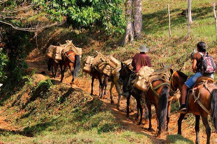 Por el camino montañoso el arriero transita su carga y su vida
